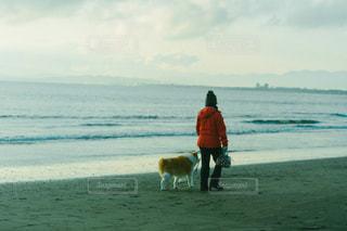 犬の散歩の写真・画像素材[1876235]