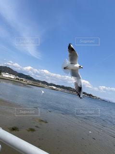 飛んでいるカモメの写真・画像素材[3168480]
