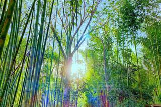京都 竹林の写真・画像素材[1877599]