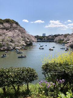 東京の桜  ボートに乗って。の写真・画像素材[1883012]