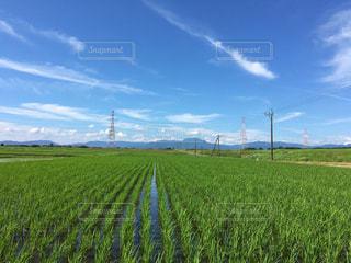 田んぼのある田舎の風景。2019年7月撮影の写真・画像素材[2340326]