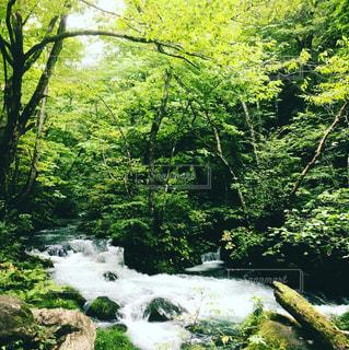 森の中の大きな滝の写真・画像素材[1878793]
