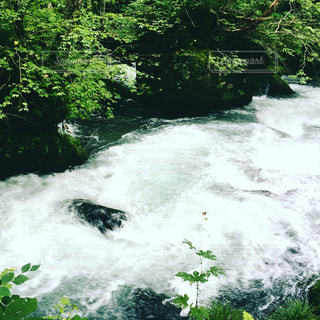 奥入瀬渓流の写真・画像素材[1881181]