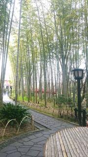 背の高い竹やぶと小道。の写真・画像素材[2037458]