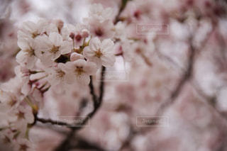 花ひとつの写真・画像素材[2080061]