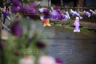花と鯉のぼりの写真・画像素材[2081336]