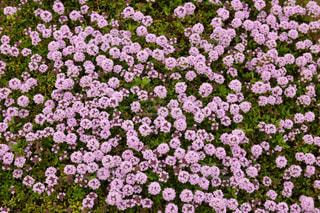 花の絨毯の写真・画像素材[2087217]