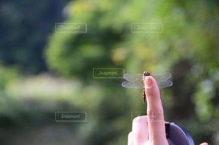 この指とまれの写真・画像素材[2095867]