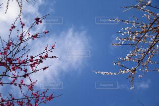 青空に映えるの写真・画像素材[2116299]