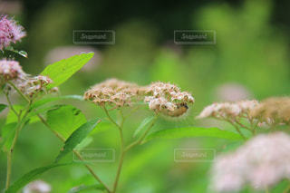 花の写真・画像素材[2256155]