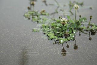 花の写真・画像素材[2256170]