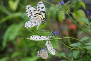蝶々の写真・画像素材[2256762]