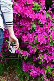 植物のピンクの花を見た少女の写真・画像素材[2259066]