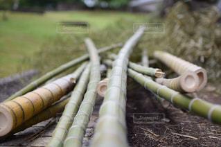 倒れた竹の写真・画像素材[2270590]