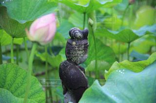 花園のクローズアップの写真・画像素材[2290819]