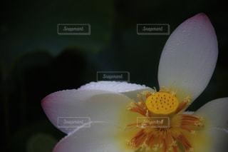 花のクローズアップの写真・画像素材[2290825]