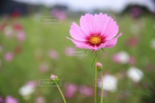 花の写真・画像素材[2484935]