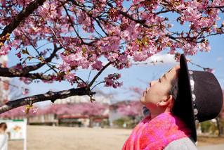春の香りの写真・画像素材[2993063]