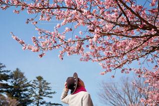 桜を眺める女性の写真・画像素材[2993062]
