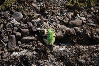 岩を登るカエルの写真・画像素材[3134664]