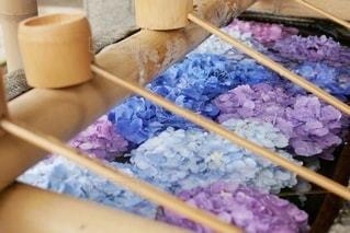 手水舎の紫陽花の写真・画像素材[3345861]