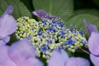 花のクローズアップの写真・画像素材[3345865]