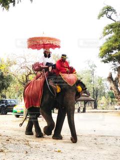 象に乗っている女性の写真・画像素材[2878620]