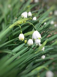 花のクローズアップの写真・画像素材[3038573]