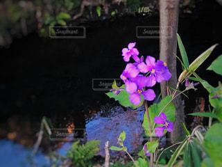 花のクローズアップの写真・画像素材[3038575]