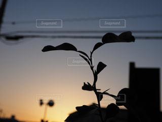 夕日と私の写真・画像素材[1880056]