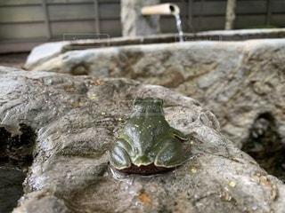 モデルのような可愛いカエルちゃんの写真・画像素材[2118166]