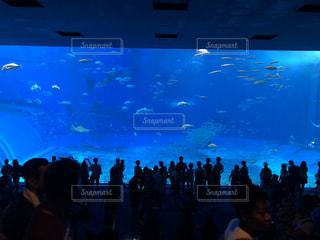沖縄美ら海水族館を背景に暗い部屋に大勢の人々が集まるの写真・画像素材[3055456]