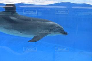 青い水の中を泳ぐイルカの写真・画像素材[2837693]
