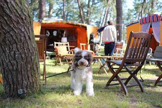 愛犬とキャンプの写真・画像素材[2111453]