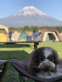 愛犬とキャンプの写真・画像素材[2111581]