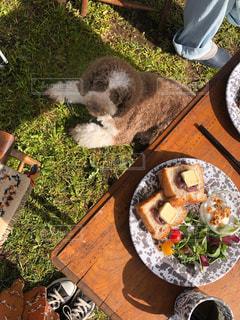 愛犬と朝ごはんの写真・画像素材[2111582]