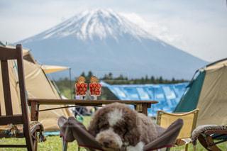 愛犬とパフェの写真・画像素材[2111589]