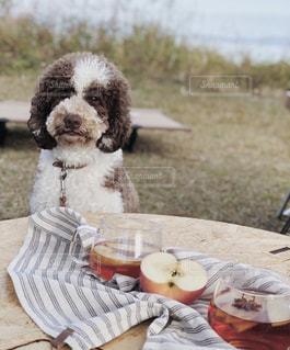 愛犬とアップルティーの写真・画像素材[2111592]