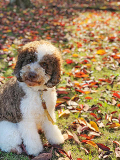 愛犬と秋を探しにの写真・画像素材[2111593]