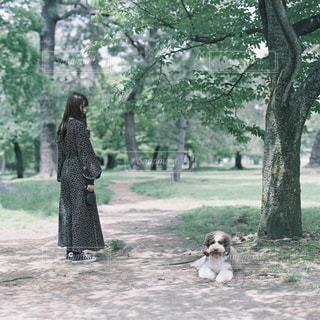 愛犬と散歩の写真・画像素材[2198683]