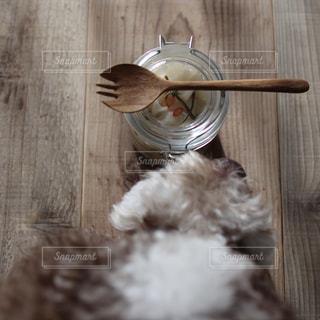 愛犬と千枚漬けの写真・画像素材[2198953]