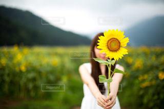 ひまわり畑の写真・画像素材[2209049]
