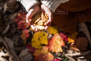 落ち葉クッキーの写真・画像素材[2921761]