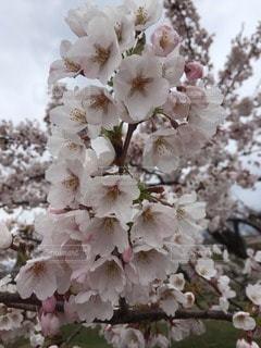 お花畑 - No.65215