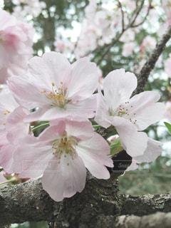 植物にピンクの花の写真・画像素材[1913739]
