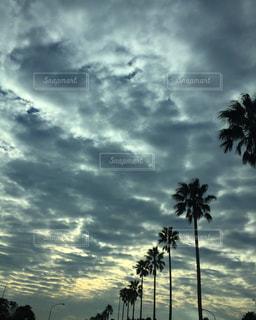 曇りの日でヤシの木のグループの写真・画像素材[1900475]