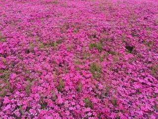 花の写真・画像素材[67082]