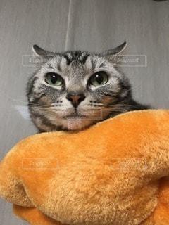 猫の写真・画像素材[67740]
