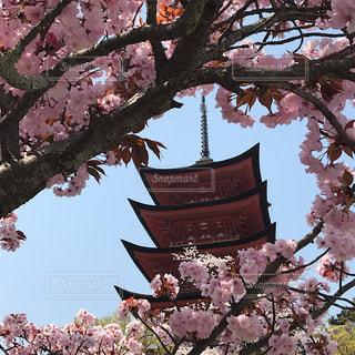 広島旅行♡の写真・画像素材[1982573]
