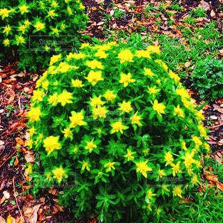 花園のクローズアップの写真・画像素材[3450714]